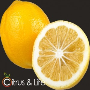 Lemon Citrus & Life