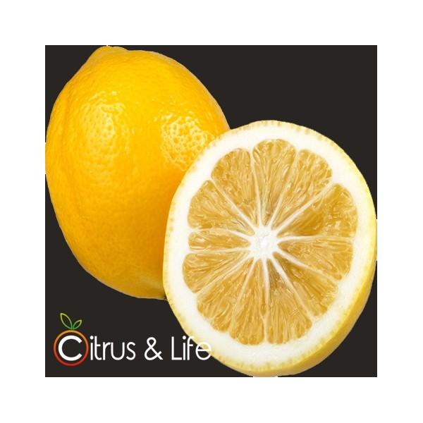 Lemon Citrus & Life