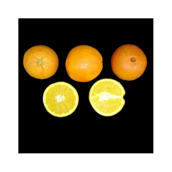 Naranja Fukumoto