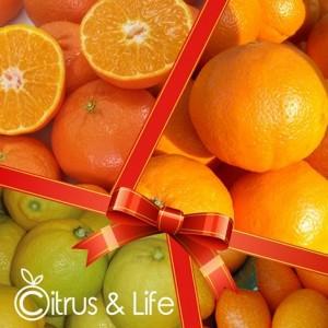 Pack 2 orangen, mandarinen, zitronen und exotischen