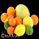 Pack 2 oranges, tangerines, lemons and exotic