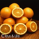 Taronges Citrus & Life