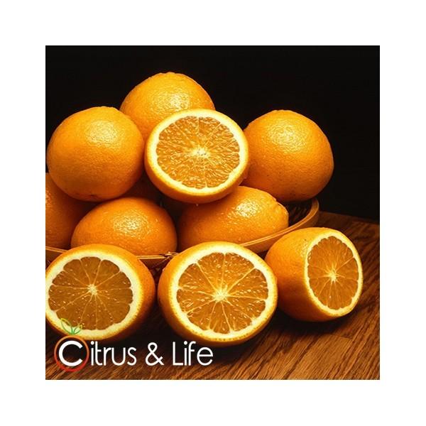 Oranges Citrus & Life