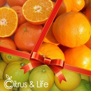 Pack oranges, mandarins, and lemons
