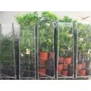 Pack Nursery Trees
