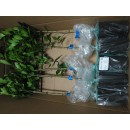 Pack 2 Assorted Nursery Trees
