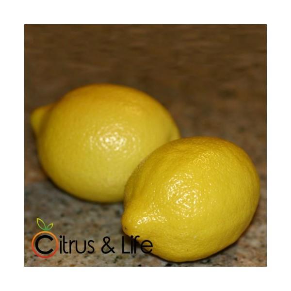 Llimona Citrus & Life