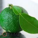 Yuzu verde