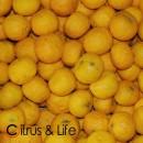 Yellow Yuzu C&L