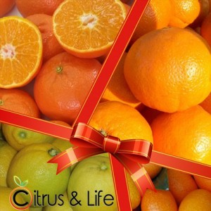 Pack 2 oranges, tangerines, lemons and exotic