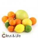 Pack 2 taronges, mandarines, llimones i exòtics