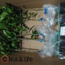 Pack Plantones
